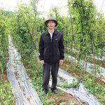 Doanh nhân Hà Minh Tuấn và niềm đam mê xây dựng vùng dược liệu quý Hải Hà