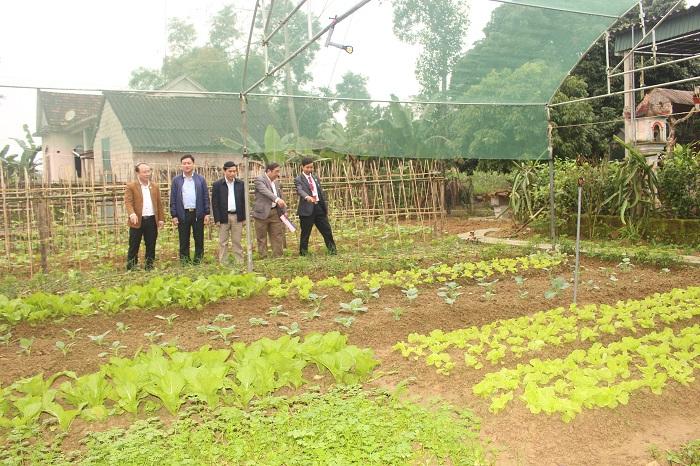 Những luống rau từ Khu vườn mẫu xanh mướt của gia đình anh Lê Xuân Tiến, thôn Đồng Lạc.