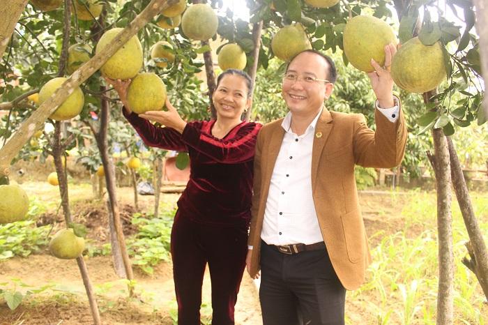 Vườn bưởi sai quả của gia đình chị Đoàn Thị Huệ ở thôn Thị Hòa, xã Đức Lạc.