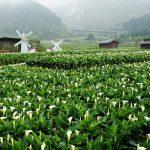 """Đài Loan nổi tiếng với """"trà sữa"""" mà còn cả 1 thế gian xanh chờ đón bạn"""