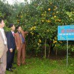 Huyện Can Lộc – Hà Tĩnh: Đoàn kết, đồng lòng tạo nên thắng lợi trong xây dựng nông thôn mới