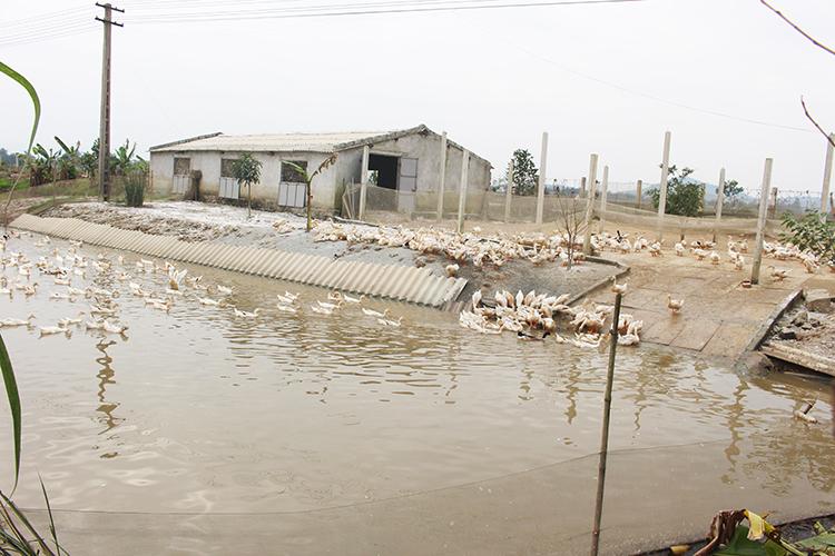Hệ thống vườn ao chuồng ở huyện Can Lộc đem lại thu nhập kinh tế cao cho người dân