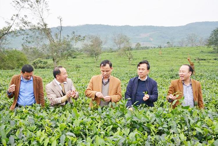 Mô hình trồng chè theo hướng VietGAP ở xã Kỳ Trung, huyện Kỳ Anh đem lại hiệu quả kinh tế cao cho người dân nơi đây.