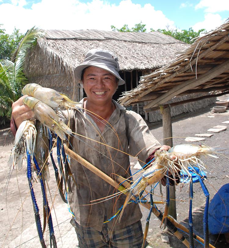 Nông dân huyện Phước Long thu hoạch tôm càng xanh trên đất lúa.