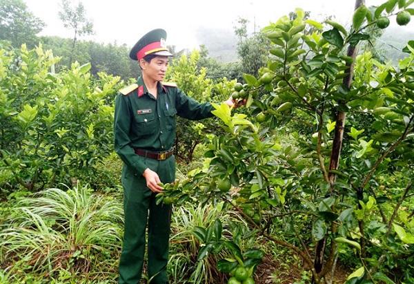 Đại úy Trần Duy Toàn thăm vườn chanh không hạt của đơn vị