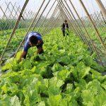 Xã Nam Thái – Nam Đàn – Nghệ An: Phấn đấu xây dựng nông thôn mới kiểu mẫu
