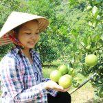 Nghệ An: Huyện Yên Thành tập trung thu hút đầu tư