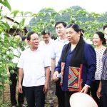Sơn La:   Cây ăn quả trên đất dốc tạo ra hiệu quả kinh tế cao trong sản xuất nông nghiệp
