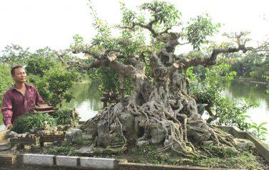 Bí mật vườn cây của nghệ nhân đất kinh kì
