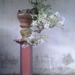 Bùi Triệu Vương – Nghệ nhân am tường về văn hóa sinh vật cảnh