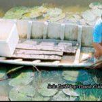 Huyện Hồng Dân, Tỉnh Bạc Liêu : Tập trung phát triển nông nghiệp toàn diện, hiện đại