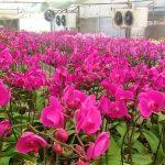 Công ty CP giống-vật tư nông nghiệp công nghệ cao Việt Nam: Nhành lan thắm trong vườn xuân đất tổ