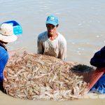 Huyện Đông Hải – Tỉnh Bạc Liêu: Quyết tâm trở thành huyện trọng điểm về phát triển kinh tế biển