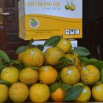 """Hà Tĩnh"""" 9X khởi nghiệp thành công với mô hình trồng cam theo tiêu chuẩn VIETGAP"""
