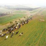 Ngành chăn nuôi làm gì để tránh thua trên sân nhà trong cuộc chơi CPTPP