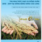 VietinBank cho vay thu mua thóc gạo với lãi suất ưu đãi 6%