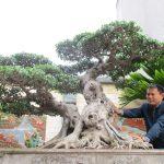 Doanh nhân Nguyễn Đức Hưng – Nghệ nhân say mê cây cảnh