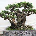 Gửi hồn trong mỗi thế cây
