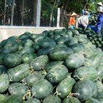 """Trung Quốc """"siết"""" nhập khẩu trái cây từ Việt Nam"""