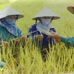 Tập đoàn Thai Binh Seed:  Chuyện đời, chuyện nghề của Doanh nhân tuổi Dần