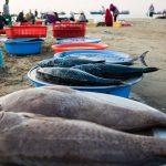 Những mẻ cá lên bờ lúc tinh mơ ở bãi biển Sơn Trà