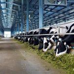 Vinamilk: Xây dựng hệ thống trang trại bò sữa chuẩn quốc tế, công nghệ 4.0 toàn diện