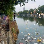 Ứng xử có văn hoá với môi trường sống