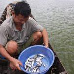 An Giang mùa lũ… cạn: Dòng sông trơ đáy, chẳng thấy cá tôm