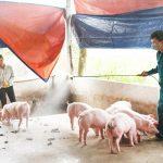 Đã chi hơn 13.000 tỷ đồng hỗ trợ phòng, chống dịch tả lợn châu Phi