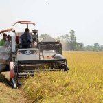 Tăng xuất khẩu gạo, sản xuất lúa thu đông tăng tốc