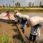 Gạo Việt có giá, ĐBSCL thừa thắng xông lên hay tìm phương kế lâu dài?