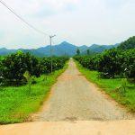 Thanh Hóa : Huyện Thạch Thành tập trung tái cơ cấu ngành nông nghiệp