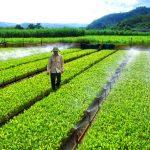 54% doanh nghiệp Việt Nam bị gián đoạn sản xuất kinh doanh nặng do biến đổi khí hậu