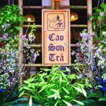 Phòng trà Cao Sơn: Góc bình yên giữa lòng Hà Nội