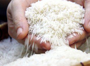Giá gạo xuất khẩu Việt Nam cao hơn gạo Thái Lan tới 30 USD/tấn
