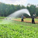 Thị trường rau quả hữu cơ: Giải pháp khai thác và phát triển