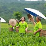 Trăn trở xây dựng thương hiệu sản phẩm làng nghề