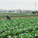 Nông nghiệp Thủ đô nỗ lực đạt mục tiêu tăng trưởng