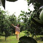 Du lịch nông nghiệp, nông thôn: Tránh phát triển theo phong trào