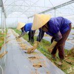 UBND tỉnh Nghệ An phê duyệt Chương trình khuyến nông giai đoạn 2021 – 2025