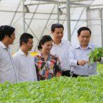 Chính sách hút doanh nghiệp đầu tư vào nông nghiệp, nông thôn của tỉnh Vĩnh Phúc