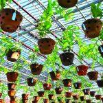 Vườn lan Giang Khánh Đặng : Không gian sống đầy ắp thiên nhiên