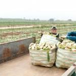 Từ chuyện giải cứu nông sản: Cần phương thức sản xuất căn cơ, hợp lý