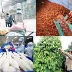 Năm 2025, mục tiêu xuất khẩu nông lâm thủy sản đạt 50-51 tỷ USD