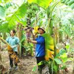 Nông nghiệp Hà Nội tăng trưởng khả quan