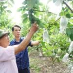 TP Hạ Long Quyết tâm sớm cán đích nông thôn mới