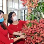 Sàn TMĐT và DN bán lẻ 'bắt tay' hỗ trợ tiêu thụ vải thiều Bắc Giang