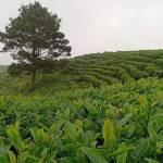 Khoa học công nghệ góp phần tăng năng lực cạnh tranh ngành nông nghiệp
