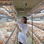 Hà Nội gỡ rào cản đầu tư vào nông nghiệp