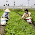 Hệ thống truy xuất nguồn gốc nông sản: Minh bạch thông tin về sản phẩm